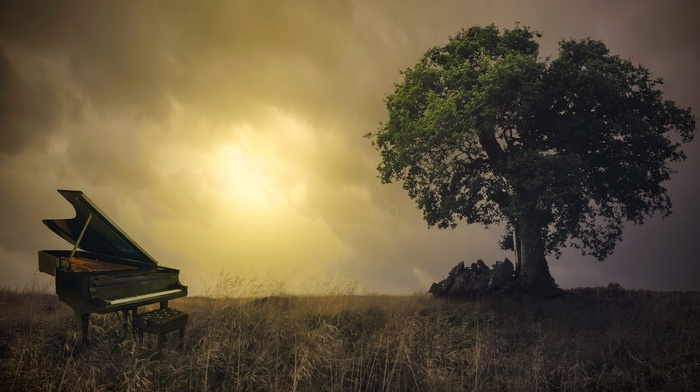 photo manipulation, nature, chair, branch, trees, leaves, piano, grass, Sun, clouds, field