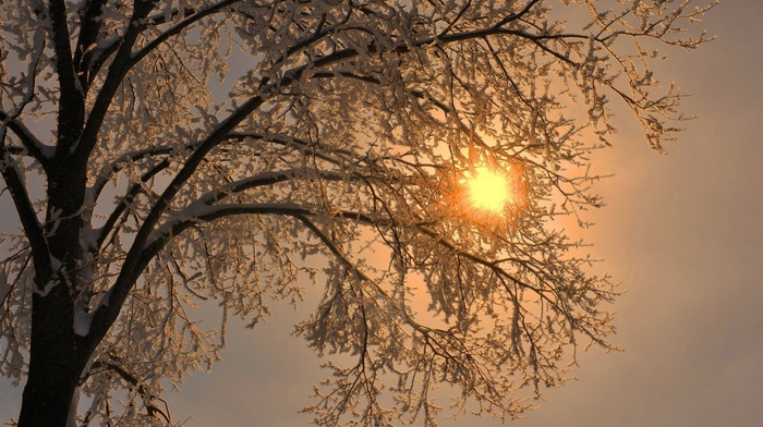 branch, snow, frost, trees, simple, winter, nature, Sun