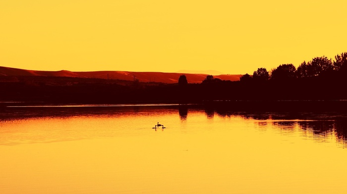 orange, trees, sunset, water, landscape, photography, lake