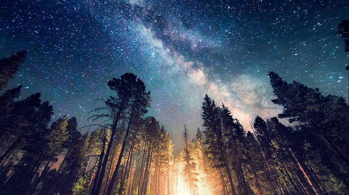 Milky Way, landscape, lights, galaxy, long exposure, starry night, camping, trees, nature, forest, New Mexico