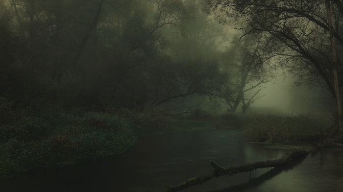 Germany, nature, landscape, dark, trees, mist, river, atmosphere, shrubs, forest