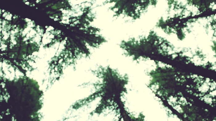 photography, trees, blurred