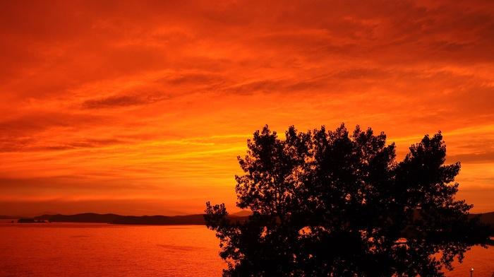 sunset, trees, nature, landscape, orange, photography, coast