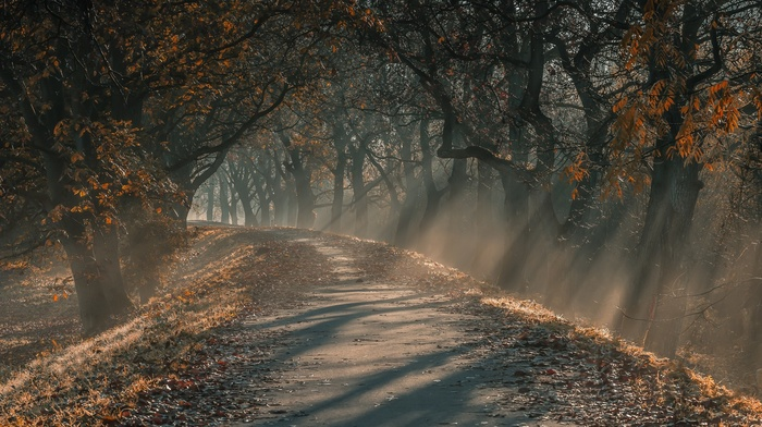 sun rays, mist, trees, leaves, dirt road, morning, fall, landscape, nature, Germany, path, sunlight