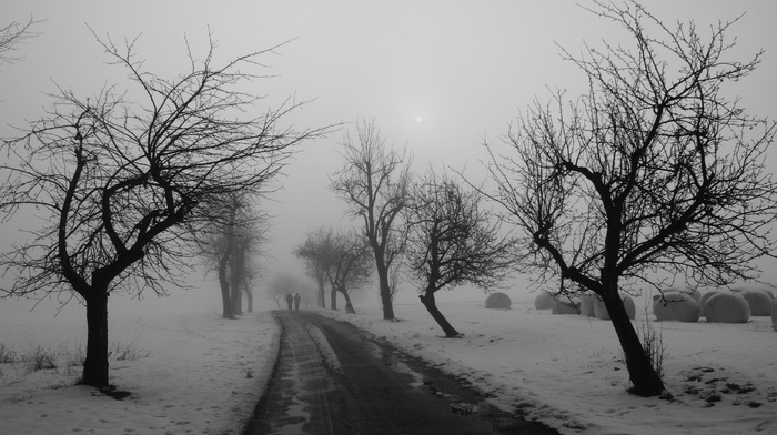 road, landscape, nature, people, snow, trees, winter, photography