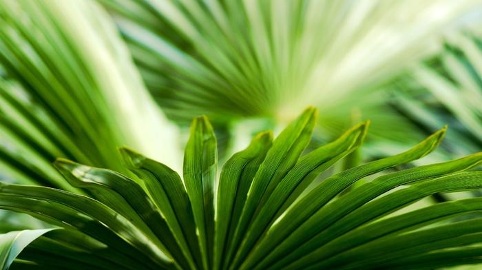 plants, leaves, photography, nature, green, macro