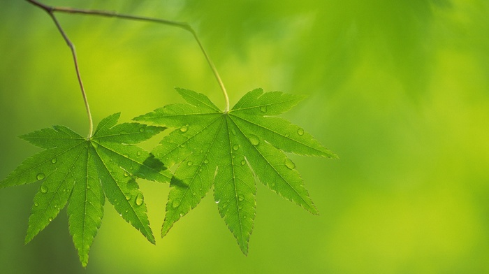leaves, nature, macro, plants, photography, green