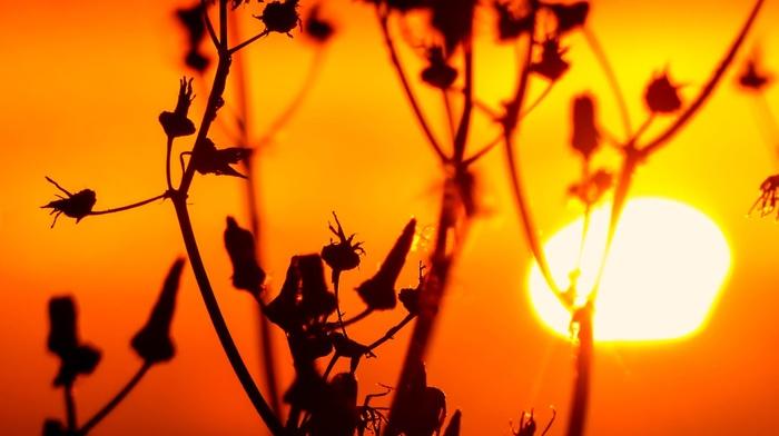 photography, sunset, nature, plants, macro, silhouette