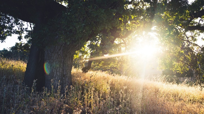 nature, landscape, photography, plants, sunlight, branch, field, trees