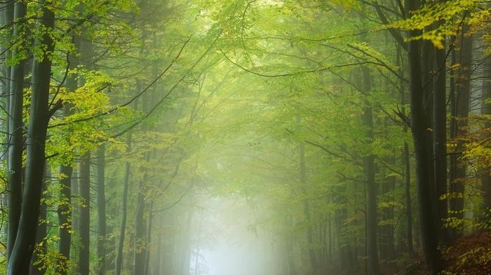 sunlight, leaves, morning, landscape, road, forest, trees, nature, mist, tunnel, green, Czech Republic