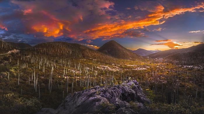 clouds, shrubs, valley, Mexico, sky, landscape, sunset, nature, cactus, sunlight, desert, hills