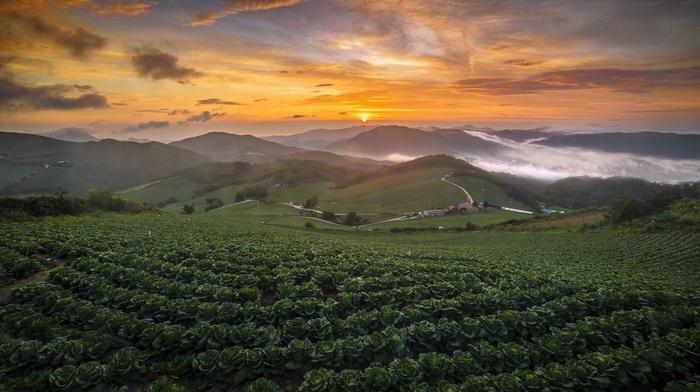 summer, nature, sky, South Korea, sunlight, mist, landscape, mountains, field, clouds