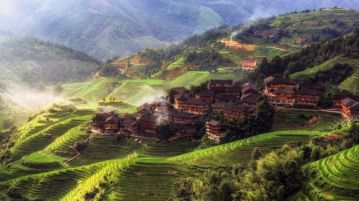 terraced field, forest, mist, trees, nature, China, rice paddy, hills, house, landscape, morning, Asia, village