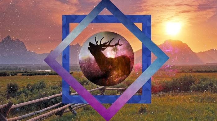peaceful, nature, deer
