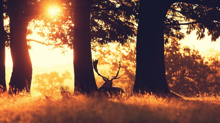 deer, sunlight, animals, photography, grass, field, plants, trees