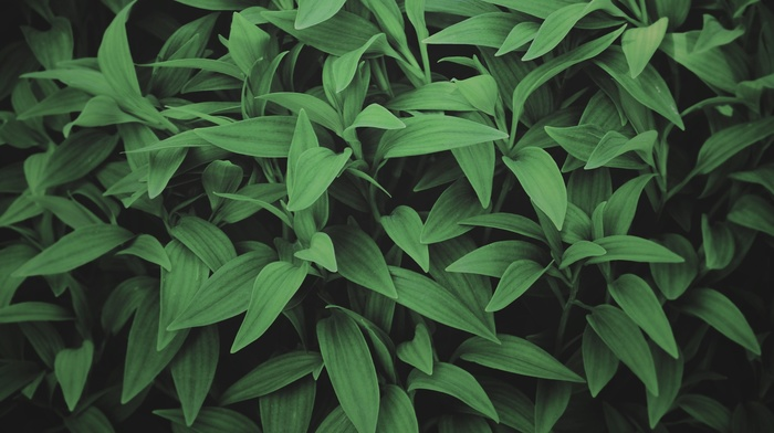 green, leaves, photography, plants