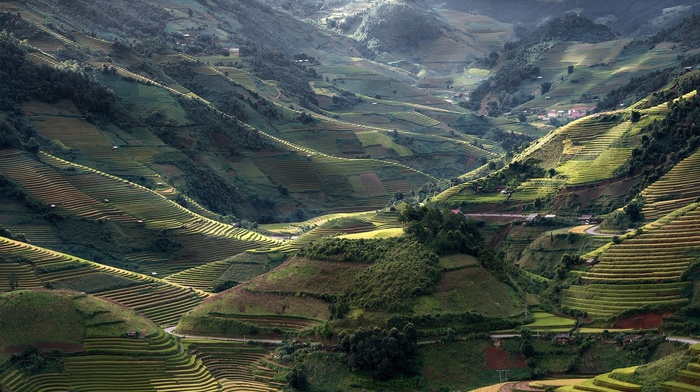 village, green, Vietnam, rice paddy, terraces, sunlight, nature, mountains, landscape, road, field, trees