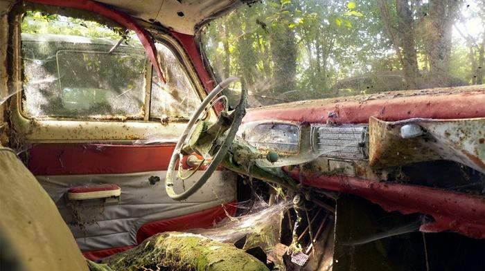 interior, vehicle, car, wreck, spider