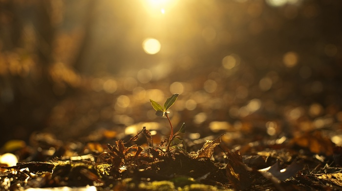 nature, plants, photography, sunlight, fall, depth of field