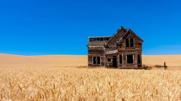 landscape, nature, photography, plants, photo manipulation, wheat