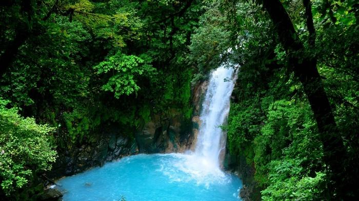 trees, water, nature, waterfall