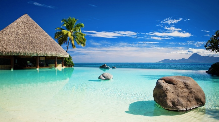 beach, tropical, palm trees