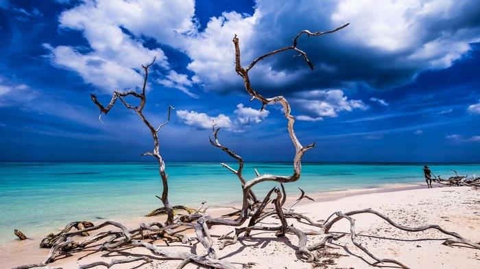 beach, turquoise, sea, water, sky, sand, tropical, nature, dead trees, clouds, Cuba, Caribbean, landscape