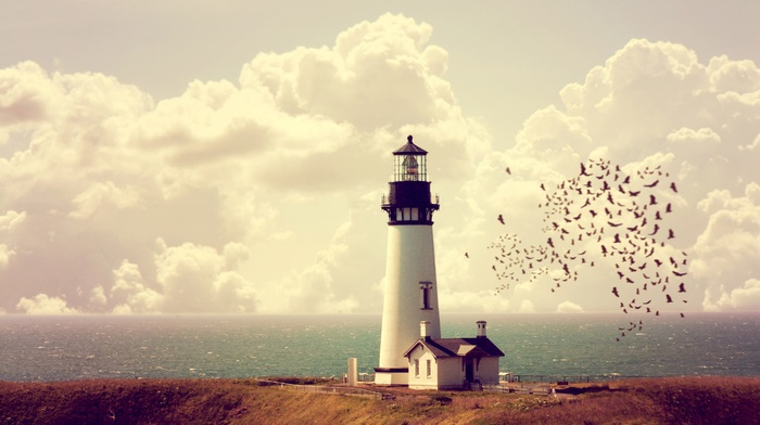 lighthouse, birds