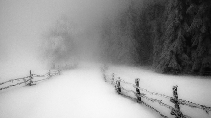 snow, morning, daylight, winter, landscape, path, forest, cold, fence, trees, road, mist, monochrome, nature
