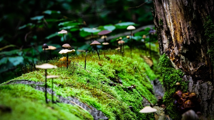 nature, macro, moss, mushroom