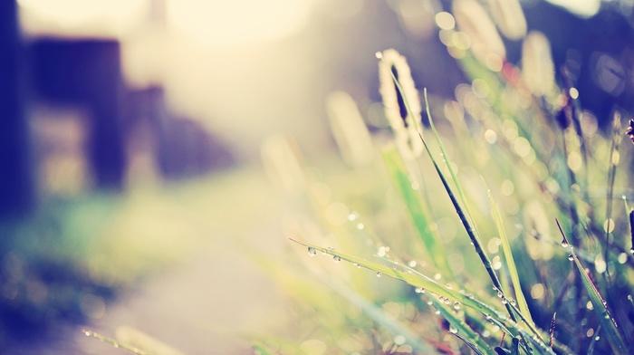 plants, grass, nature, bokeh, depth of field, sunlight, macro, water drops, filter