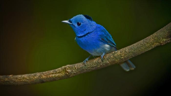 twigs, birds, animals, blue