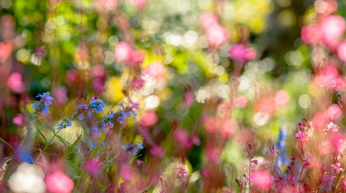 depth of field, flowers, plants, macro, bokeh, nature, blue flowers