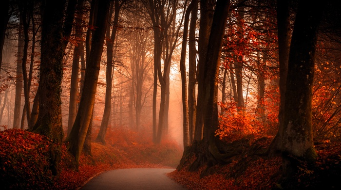 forest, path, fall, landscape, trees, leaves