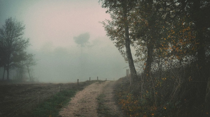 mist, trees, path, nature, dirt road, landscape, fence, daylight, shrubs