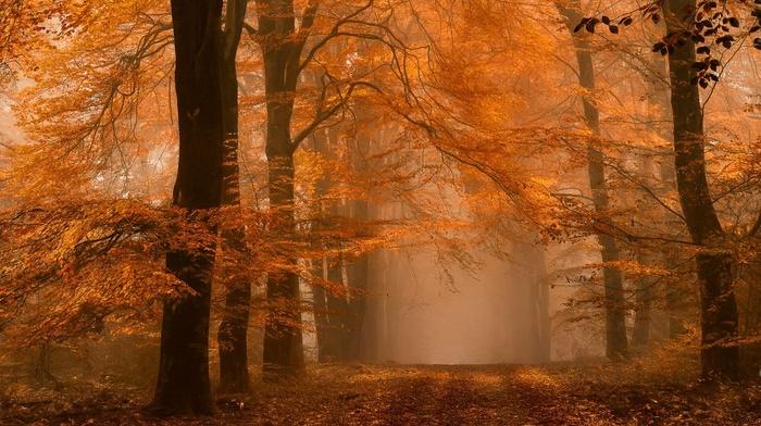 landscape, fall, Netherlands, amber, path, dirt road, nature, leaves, forest, mist