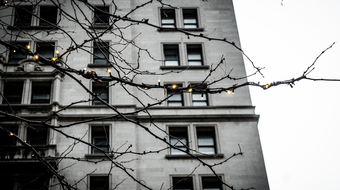 lights, window, building, urban, branch, depth of field, twigs