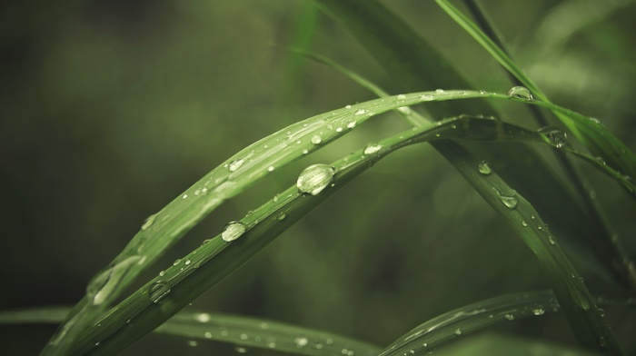 macro, water drops, plants