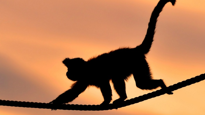 animals, ropes, monkey, silhouette