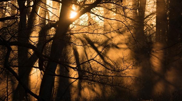 silhouette, forest, Sun, nature, mist, winter, branch, dust, trees, shadow, sunlight