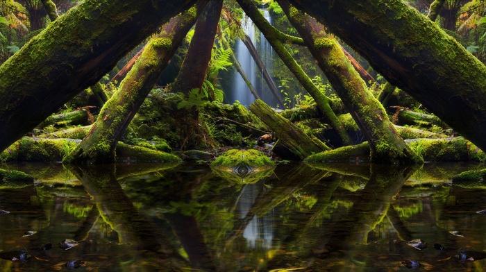 Australia, moss, mirrored, reflection, landscape, rainforest, nature, ferns, green, photography, trees