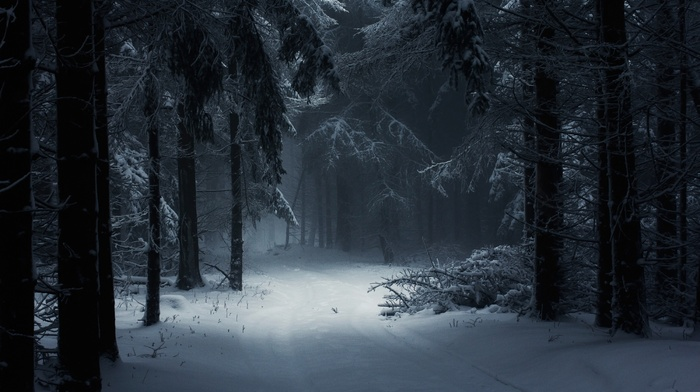 fairy tale, path, daylight, trees, forest, nature, atmosphere, landscape, Hungary, winter, mist, photography, snow