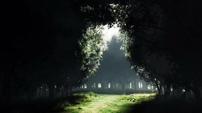 forest, trees, Sun, mist