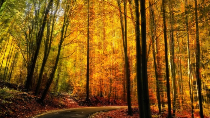 landscape, trees, forest, fall, road, path, sunlight, nature, yellow