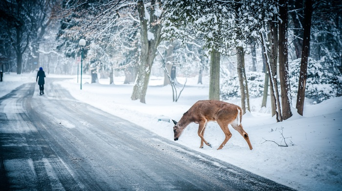 landscape, path, deer, trees, snow, nature, winter