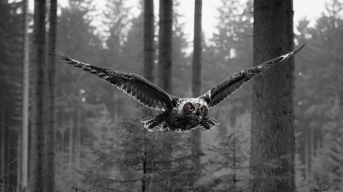 selective coloring, animals, owl