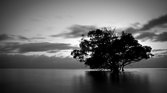 dark, trees, water