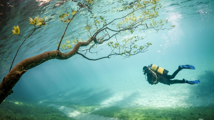 underwater, Austria, Grner See, lake, trees, branch, water, sea, divers