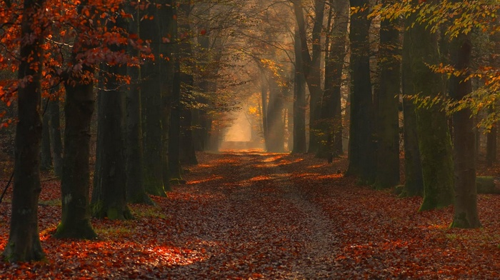 leaves, fall, trees, sun rays, photography, landscape, morning, sunlight, red, nature, forest, path