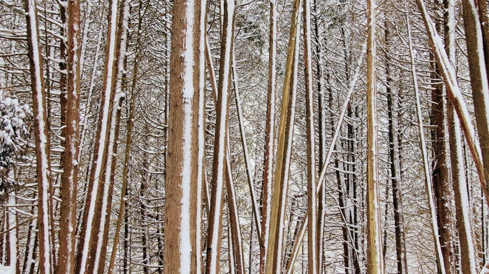 branch, nature, snow, forest, trees, winter, wood